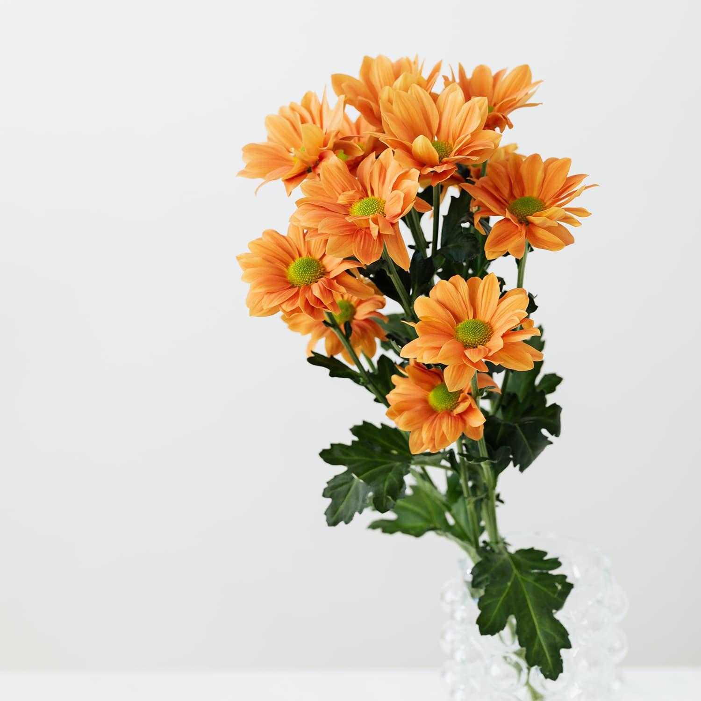 Blume_02