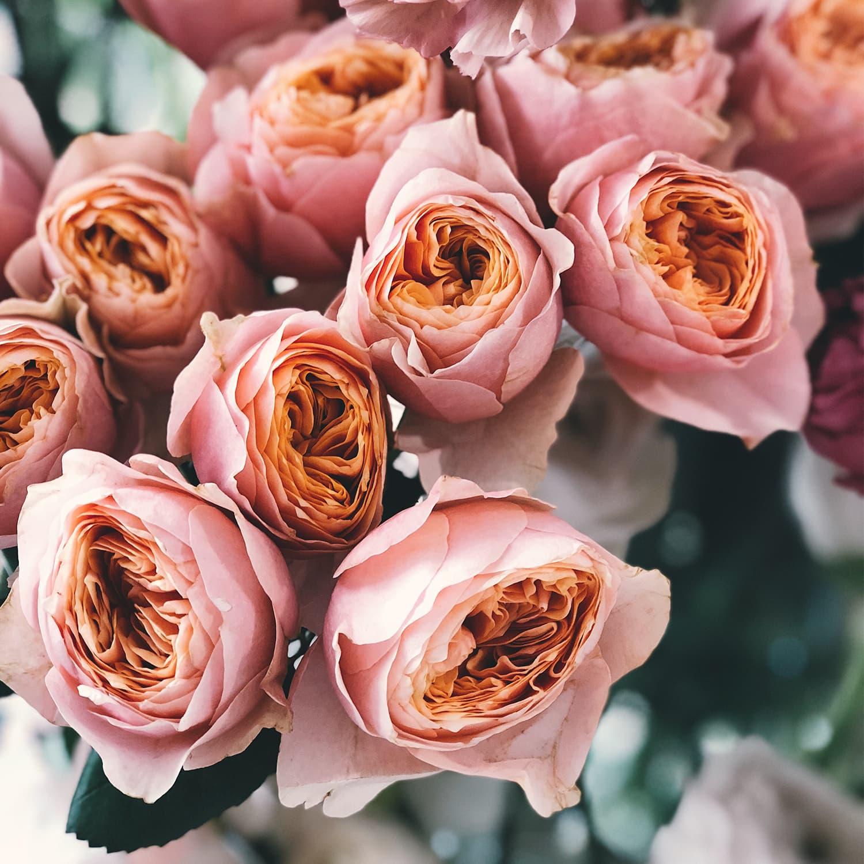Blume_08