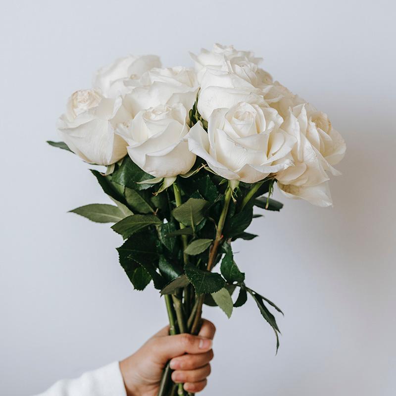 Rose_02