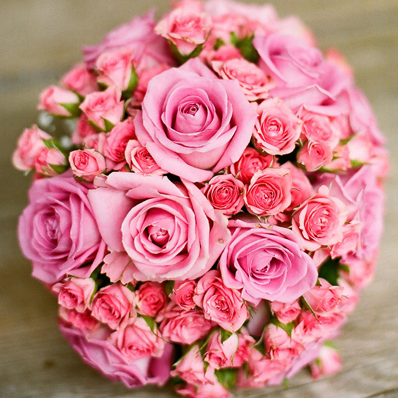 Rose_09